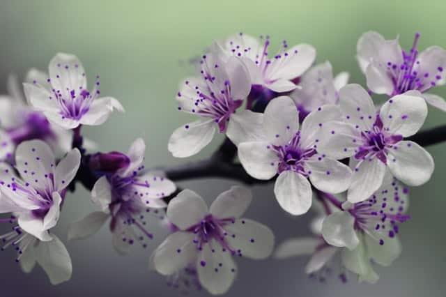 L'agitateur Floral promotions