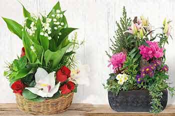 promotions_L'agitateur-Floral